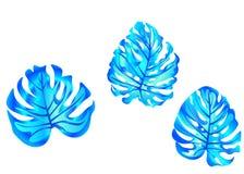 web ajuste dos elementos gráficos botânicos do vetor Motivos tropicais das folhas para o gráfico, matéria têxtil, design de inter ilustração do vetor