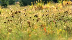 Web in autumn grass stock footage