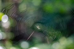 Web avec une petite araignée dans la forêt image libre de droits