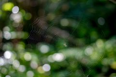 Web avec une petite araignée dans la forêt images libres de droits