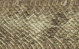 Web backgrounds and textures. Background for designers of Web sites with an interesting background in snake skin pattern Royalty Free Stock Photos