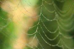 Web bagnato Immagini Stock