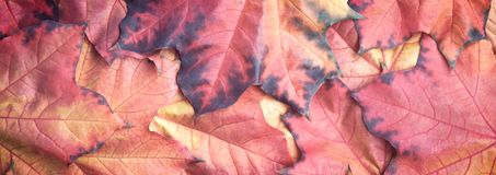 Web banner colorful autumn leaves texture background Royalty Free Stock Photography