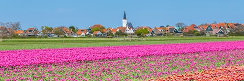 Skyline Den Hoorn Texel the Netherlands. Web banner Den Hoorn a small village on the wadden islands Texel in the Netherlands, with colourful tulips in the front royalty free stock images