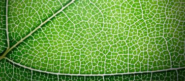 Web banner green leaves macro texture background Stock Image