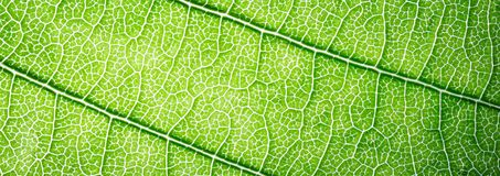 Web banner green leaves macro texture background Royalty Free Stock Photo