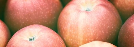 Web banner fresh red apples background Stock Photos
