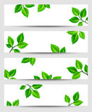 Web banners with green leaves. Vector eps-10. Set of vector web banners with green leaves Stock Photography