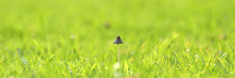 Web banners, mushroom on the grass Stock Image