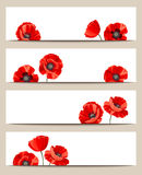 Web banners with red poppies. Vector eps-10. Stock Photos