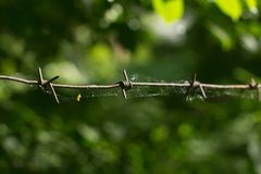 Web on a barbed wire against foliage royalty free stock image
