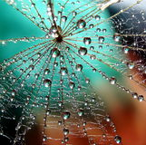 Web. Beautiful dandelion web with water drops on the multicolored background Stock Images