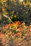 Web on beautiful forest bokeh. Lovely background with web on beautiful foliage bokeh Stock Images