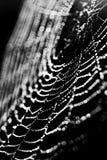 Web on a black background Stock Photo