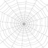 Web blanco concéntrico en un fondo blanco Foto de archivo libre de regalías
