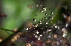 Web in bos Stock Foto's