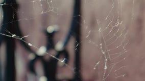 A Web branca esticou entre as barras da cerca velha do metal, no pátio da luz do por do sol vídeos de arquivo