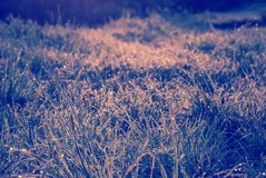 Web on branches in backlight against a background of grass tinted with purple. Meadow in dew in the dawn light tinted violet Stock Photo