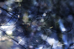 Web and Branches Royalty Free Stock Image