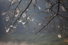 Web on the branches of trees stretched. stock photo