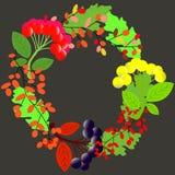 web Cadre de côtés carré de conception florale de vecteur Le rose a monté, ranunculus orange, jardin de juliet a monté, l'oeillet illustration de vecteur