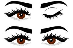 Web Closeup detail illustration of beautiful female brown eyes with eyelids open and closed stock illustration