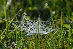 Web coberta com as gotas de orvalho Foto de Stock