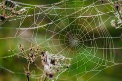 Web com gotas do orvalho da manhã no formulário da espiral Foto de Stock Royalty Free