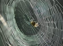 Web con la araña Imagen de archivo libre de regalías