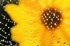 Web con le gocce di acqua della rugiada Immagini Stock