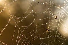Web con le gocce di rugiada Fotografia Stock