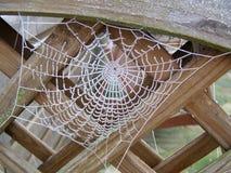 Web congelado Imagen de archivo libre de regalías