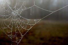 Web congelado Fotografía de archivo