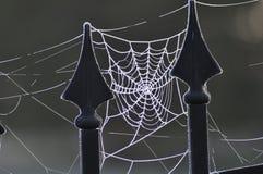 Web congelado Foto de Stock Royalty Free