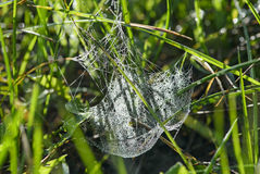 Web covered with dew drops Stock Photo