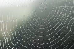 Web d'araignée avec la rosée Photos libres de droits