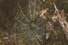Web d'automne sur des herbes photos stock