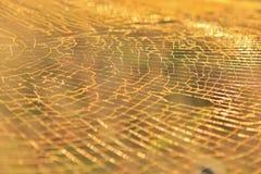 Web d'or détaillé - fond naturel d'architecture et de beauté photo stock