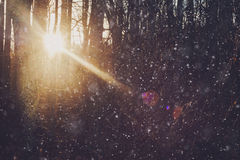 Web d'hiver Photo libre de droits