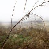 Web da manhã do orvalho do outono da natureza Imagens de Stock Royalty Free
