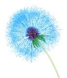 Web Dandelion Stock Images