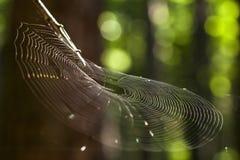 Web dans la lumière ensoleillée Photographie stock libre de droits