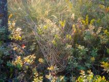 Web dans le marais Photo stock