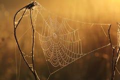 Web in dauw Royalty-vrije Stock Foto's