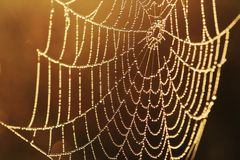Web in dauw stock foto