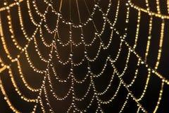 Web in dauw Royalty-vrije Stock Afbeeldingen