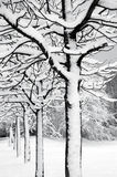 Web de árboles foto de archivo