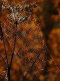 Web de araña Fotos de archivo
