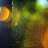 Web de araña Fotografía de archivo libre de regalías