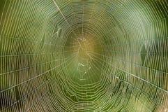 Web de araña Fotos de archivo libres de regalías